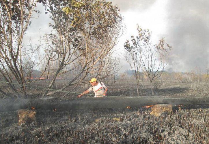 Bomberos durante el combate al incendio en la carretera Hunucmá-Sisal. (SIPSE)