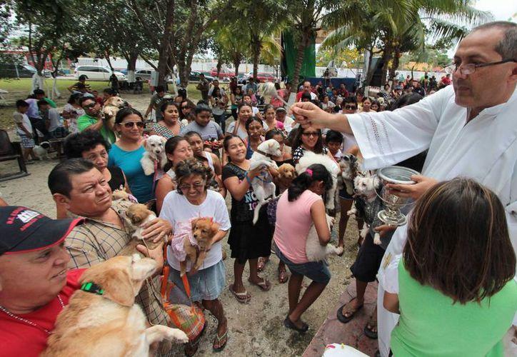 El sábado 21 de marzo las mascotas serán bendecidas. (Gustavo Villegas/SIPSE)