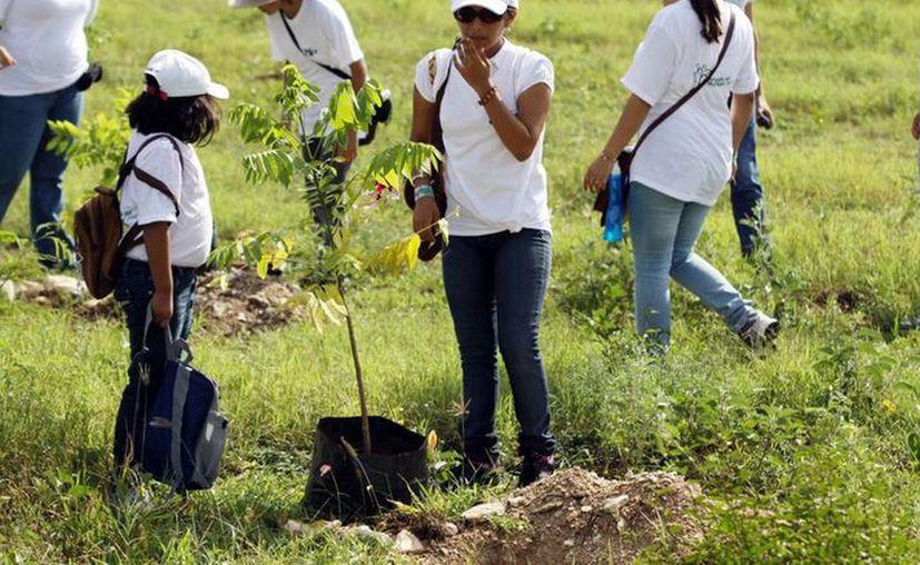 La asociación civil Reforestamos México ofrece un taller de capacitación para realizar un inventario del arbolado urbano. (Archivo/Sipse)