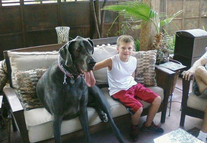 A pesar de su tamaño, 'Giant George' evitaba los otros perros y tenía miedo del agua. (Facebook oficial)