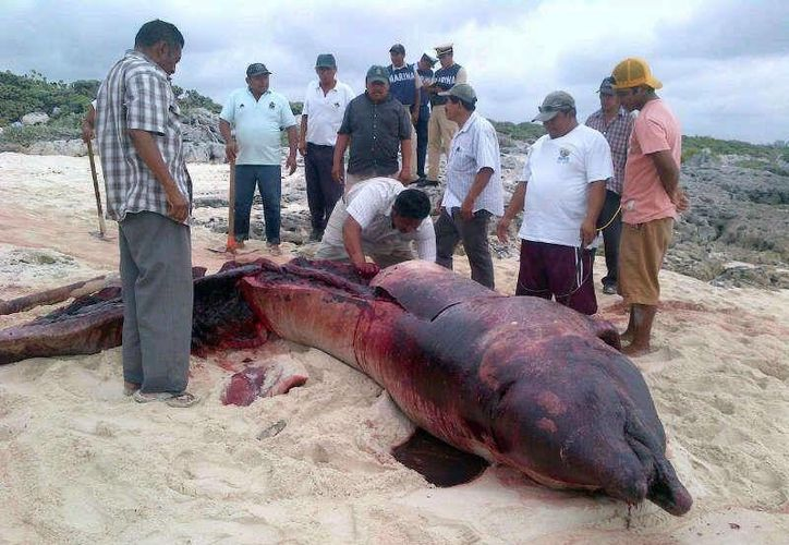 Imagen de la ballena encontrada muerta esta mañana en Cozumel. (Twitter:@ValorQroo)
