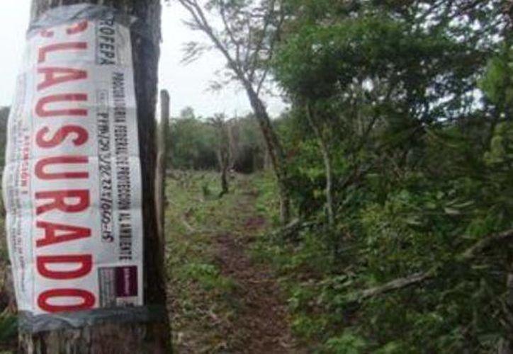 El predio devastado fue clausurado por Profepa por afectación a vegetación forestal. (Cortesía)