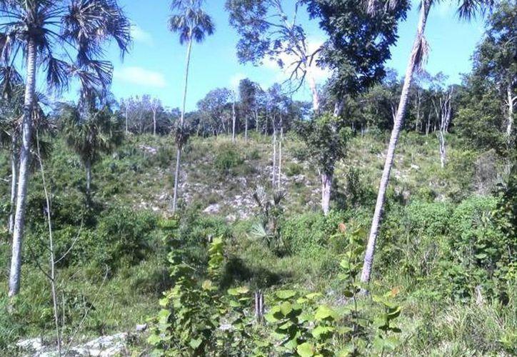 Imagen de contexto. La Profepa clausuró en Yucatán un desarrollo inmobiliario que afectaba la selva, en el norte del Estado. (Sipse/archivo)