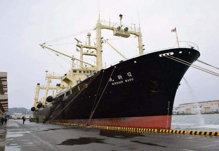Antes de la llegada de la flota, la asociación Humane Society International pidió de nuevo a Japón que abandone definitivamente la caza de ballenas. (La Jornada)