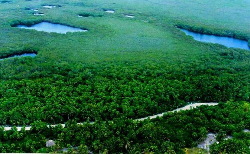 La Península de Yucatán contribuye en la lucha del cambio climático con sus áreas naturales. (Claudia Martín/SIPSE(