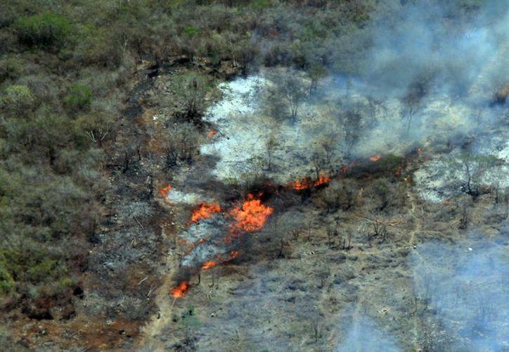 Las autoridades exhortan a los campesinos a abstenerse de realizar quemas clandestinas. (SIPSE)