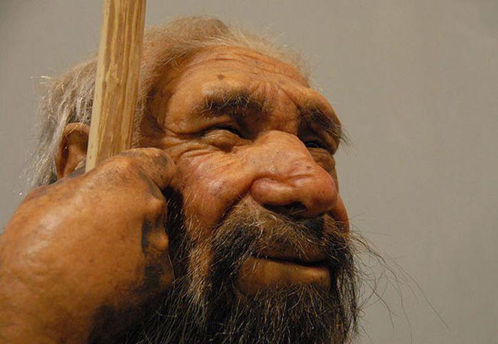 Genes de neandertales sirven para cultivar 'minicerebros' del tamaño de un guisante. (Foto: RT)