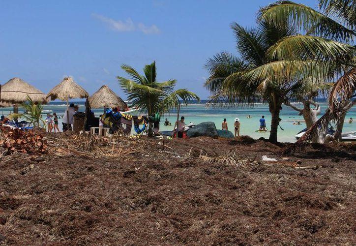 Las playas de de Quintana Roo han sido invadidas por la temporada atípica del arribo de sargazo. (Gerardo Amaro/SIPSE)