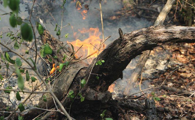 La complicación para el apagado de los incendios se debió a las características del suelo kárstico. (Paola Chiomante/SIPSE)