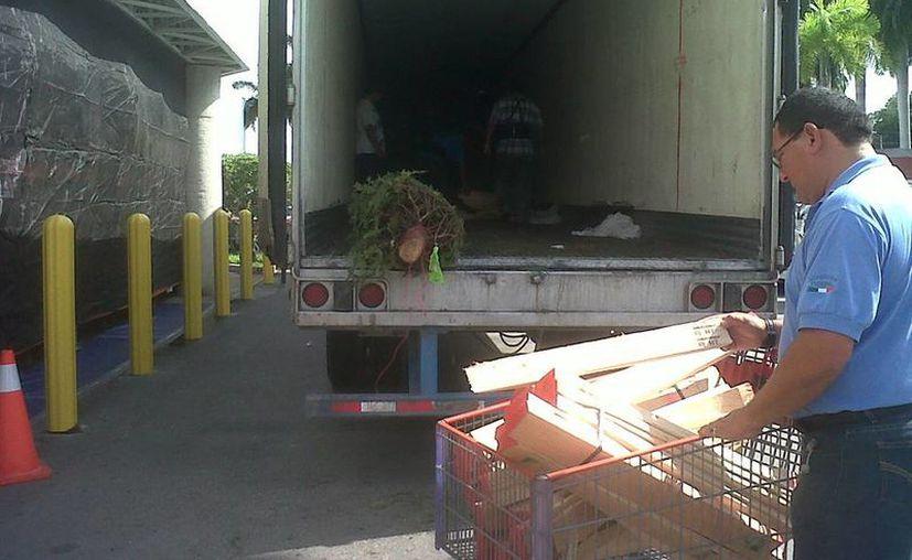 Las multas por violar la ley que regula la importación y manejo de árboles navideños pueden llegar hasta los 20 mil salarios mínimos. El primer embarque de pinos llegó ayer a Mérida. (Cortesía)