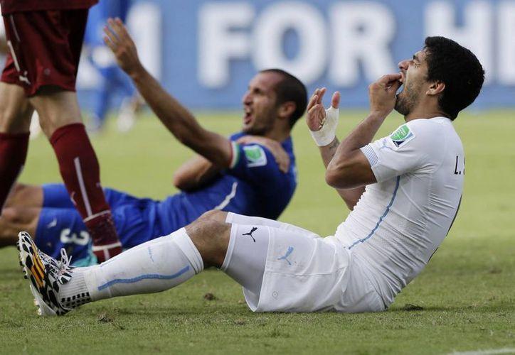 Suárez (en primer plano) se tira al pasto, como si fuera víctima, tras haber mordido a Giorgio Chiellini (atrás) en un hombro. (Fotos: AP)