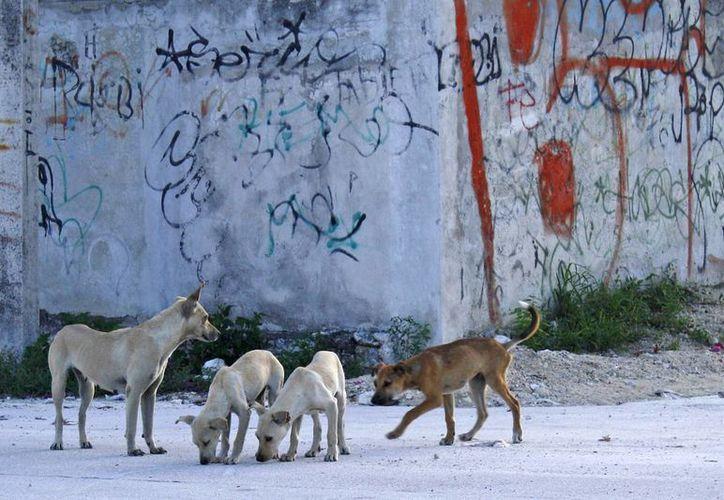 Poca gente respondió al llamado para adoptar un perro callejero, según alumnos de la universidad. (Jesús Tijerina/SIPSE)