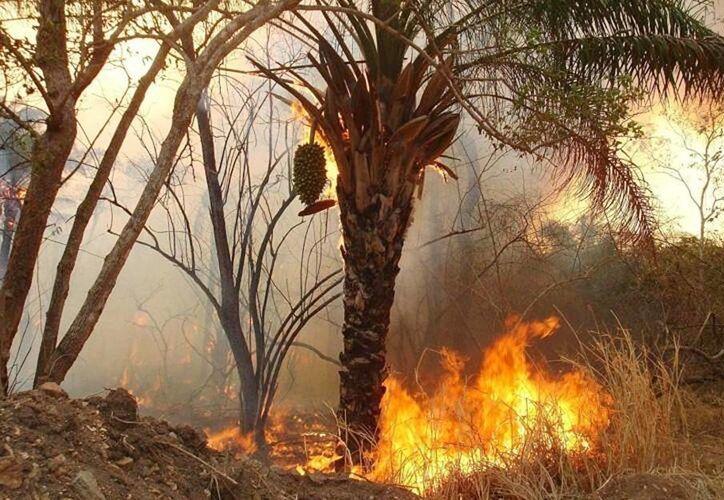 Incendio forestal ya consumió 5,500 hectáreas de maleza y pasto; amenaza reserva en Cuba. (@canaldenoticias)