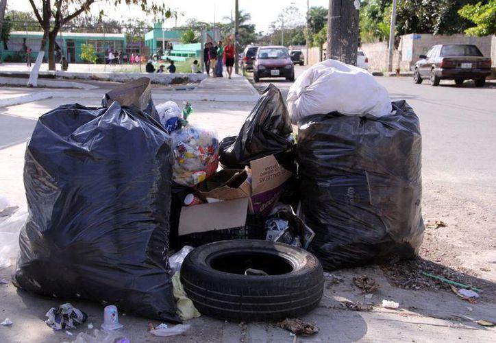 Los inconformes dan mantenimiento a las áreas verdes de la ciudad. (José Acosta/SIPSE)