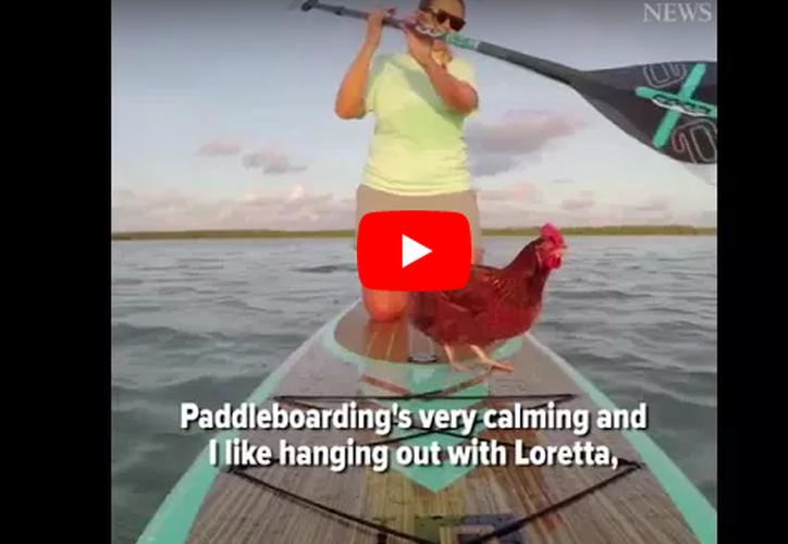 Karly Venezia, residente de Key West, compartió un video en el que pasea con su gallina. (Captura YouTube).
