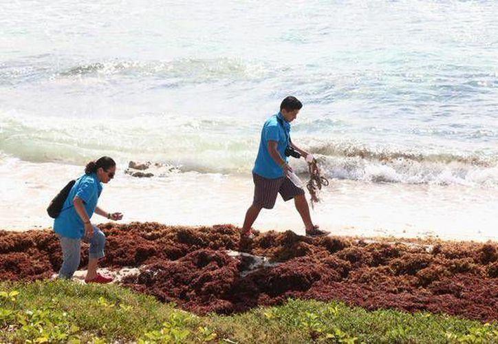 Acudieron a las Playas Box y San Martín para retirar los desechos de los litorales. (Redacción/SIPSE)