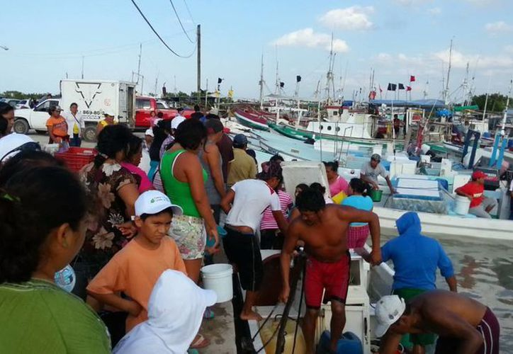 El kilo de pepino de mar se pagó a los pescadores a 40 pesos. (SIPSE)