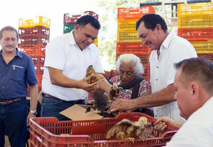Pobladores de Chumayel y Dzan recibieron diversos apoyos, como paquetes de aves de traspatio, de las manos del gobernador Rolando Zapata Bello. (Milenio Novedades)