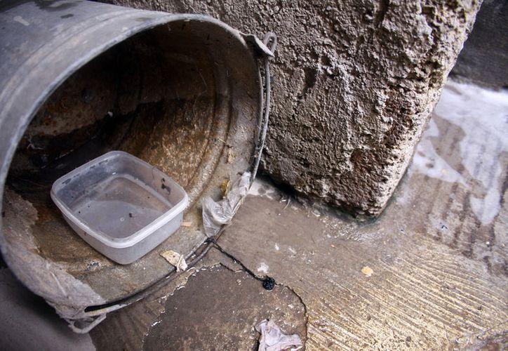 """El zika """"se mantiene vivo"""" en Yucatán: ya suman 7 los casos de la entidad. La enfermedad es trasmitida por el mosquito Aedes aegypti, que se reproduce en ambientes húmedos y en aguas estancadas. La imagen está utilizada como contexto. (Archivo)"""