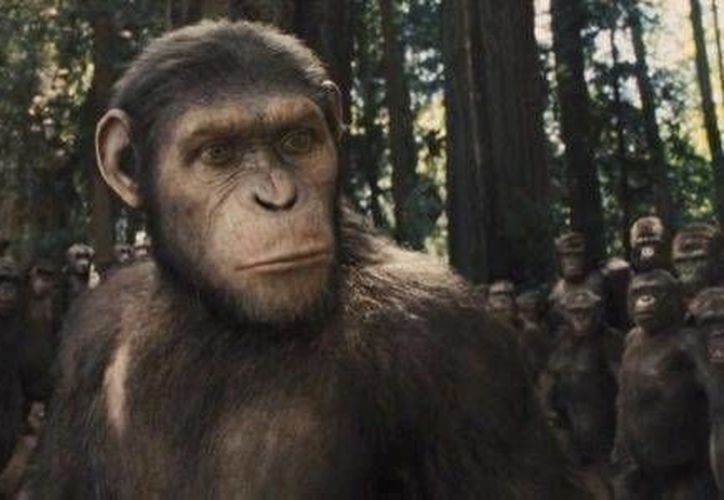 Pese al buen arranque de 'Dawn of the Planet of the Apes' en taquilla, la tendencia va a la baja. (screenrant.com)