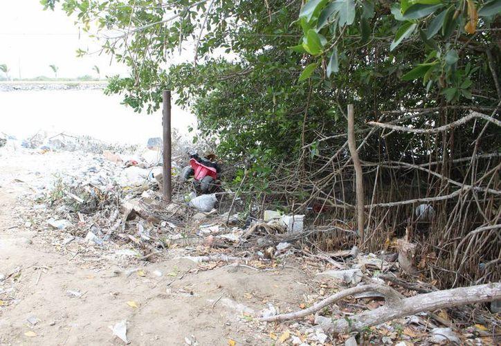 Los vecinos que rellenan con escombros el área del mangle estarían incurriendo en un delito federal. (Gerardo Keb/Milenio Novedades)