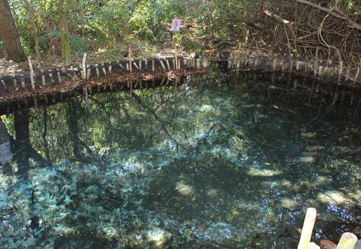 Se realizan trabajos de limpieza y mantenimiento en el espacio ecoturístico 'El Corchito', situado a la entrada de Progreso. (Foto cortesía)