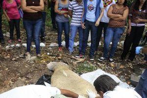 Manatí varado en Chetumal, ¿material de clase de universitarios?