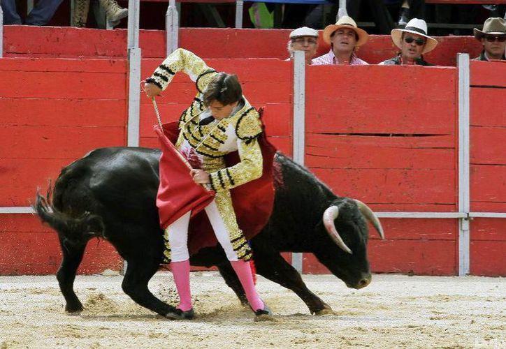 El matador yucateco se prepara en ganadería del Estado de Yucatán. (Milenio Novedades)
