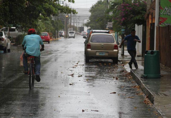 Uno de los principales problemas con los que se han encontrado en los recorridos es el exceso de basura que se tira en la calle. (María Mauricio/SIPSE)