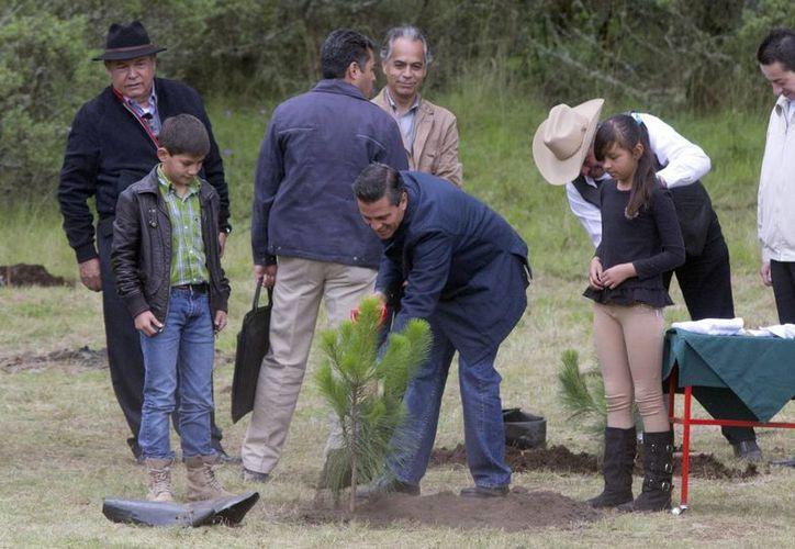 Peña Nieto llamó a todos los mexicanos a preservar el medio ambiente y los bosques. (Notimex)