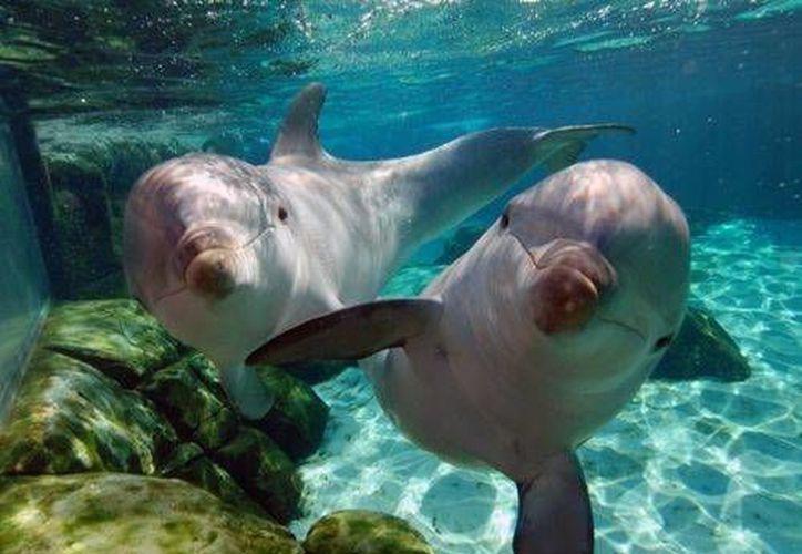 Pescadores relatan que los delfines son animales fantásticos que han salvado vidas. (Foto: Contexto/Internet)
