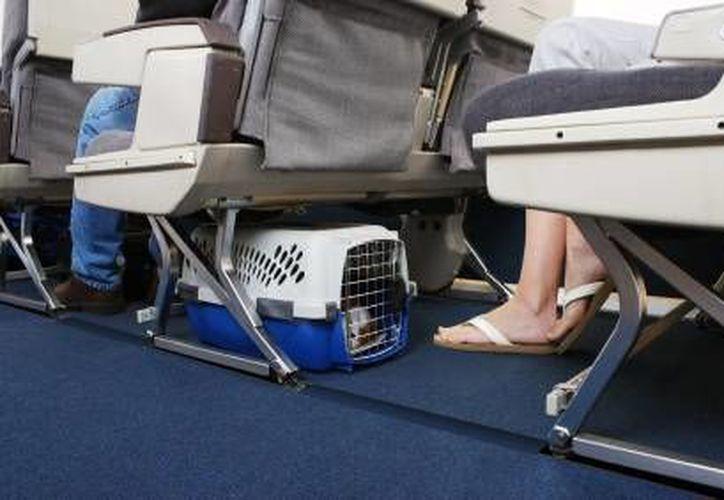 La mascota deberá viajar en una transportadora. (Foto de Contexto/Internet)