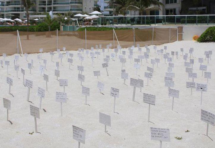 Los hoteleros han participado en las estrategias de protección a los nidos de las tortugas. (Tomás Álvarez/SIPSE)