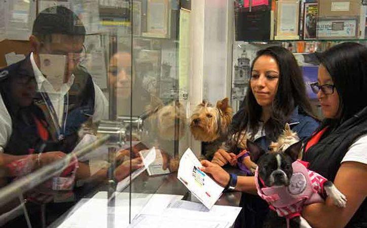 El Senasica te orienta sobre los requerimientos que debes cumplir al viajar con tu perro o gato. (Excelsior)