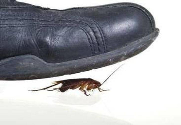 Las cucarachas pueden aplastar sus cuerpos hasta los 4 milímetros. (Contexto/Internet)