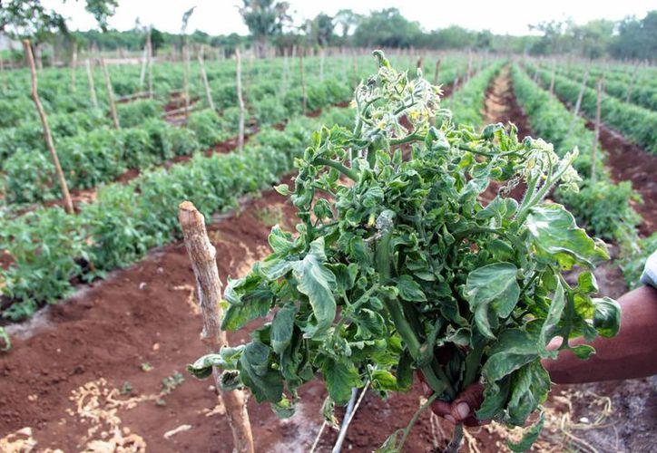 Fundación Produce Yucatán tratará de recuperar parte de los recursos caídos desde 2010. (José Acosta/SIPSE)