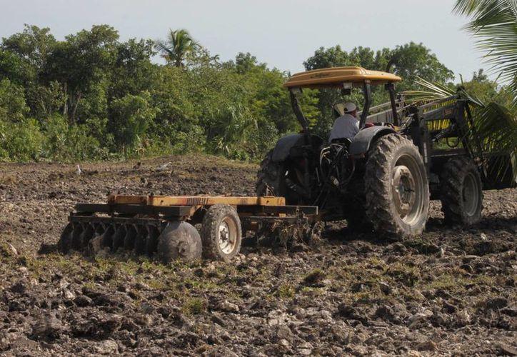 Los candidatos deberían considerar propuestas como el blindaje del agro en Quintana Roo. (Harold Alcocer/SIPSE)