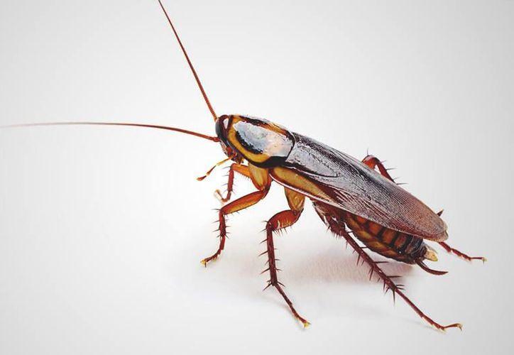 Al darse cuenta de que tenía una cucaracha en su oído la mujer entró en shock, (Foto: Contexto/Internet).