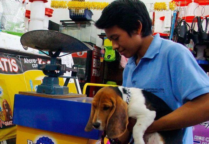 El SAT realizó un operativo de verificación en dos tiendas de mascotas de Mérida que busca evitar el contrabando de animales. La imagen esde contexto. (Milenio Novedades)