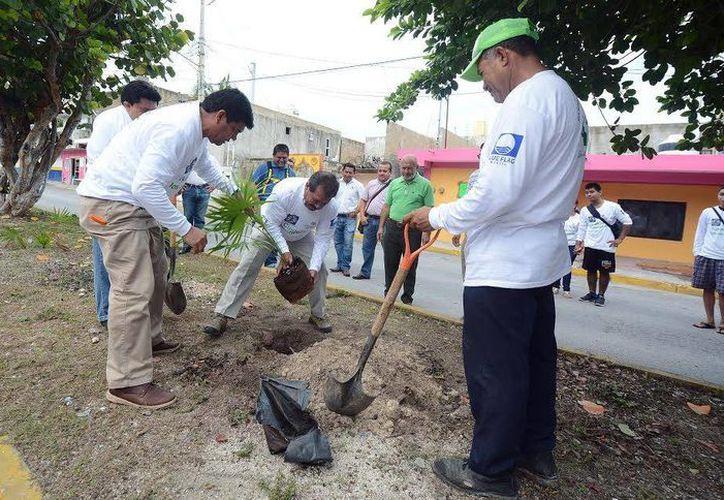 El día de hoy se realizó la reforestación en Isla Mujeres por motivo del Día Mundial del Medio Ambiente. (Redacción/SIPSE)