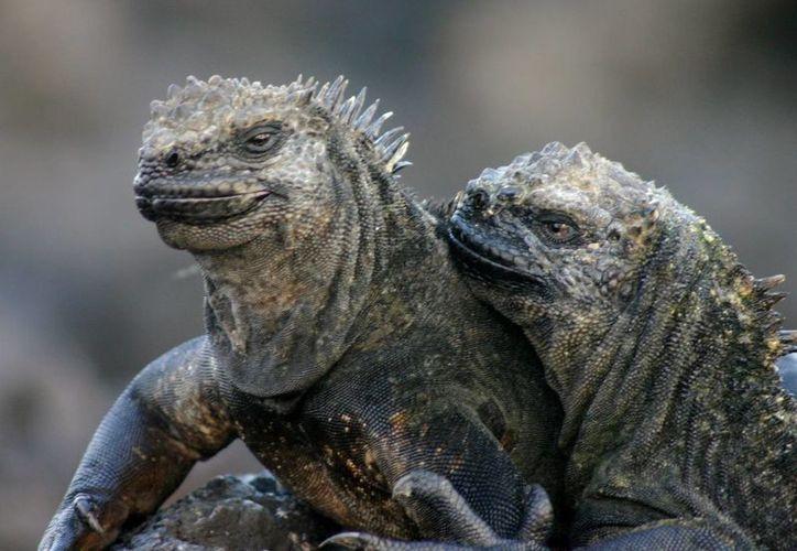 Las especies que habitan las famosas Islas Galápagos cuentan con una protección especial debido a su importancia biológica. (prezi.com)