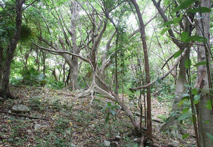 Las investigaciones señalan que se tratan de suelos jóvenes, algunos poco desarrollados y la mayoría de poca profundidad. (Sergio Orozco/SIPSE)