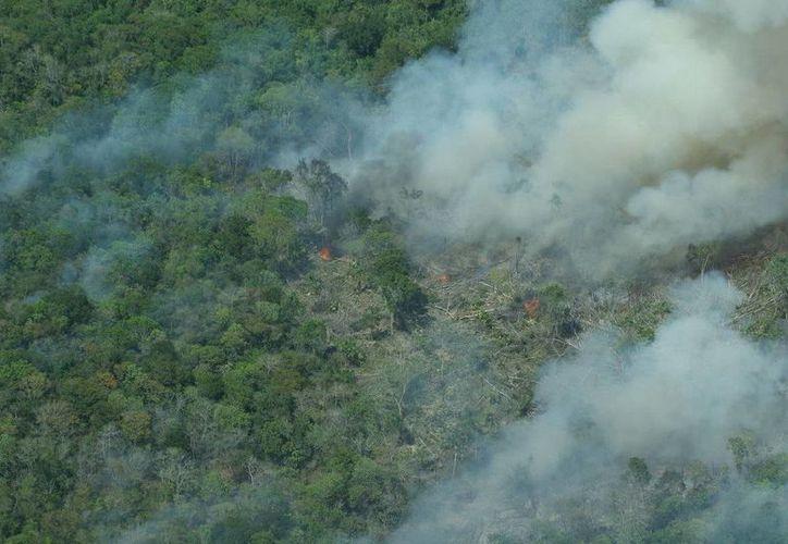 Actualmente prevalece un incendio activo, localizado al norte del ejido de Chachoben, que afecta tres hectáreas de vegetación. (Redacción/SIPSE)