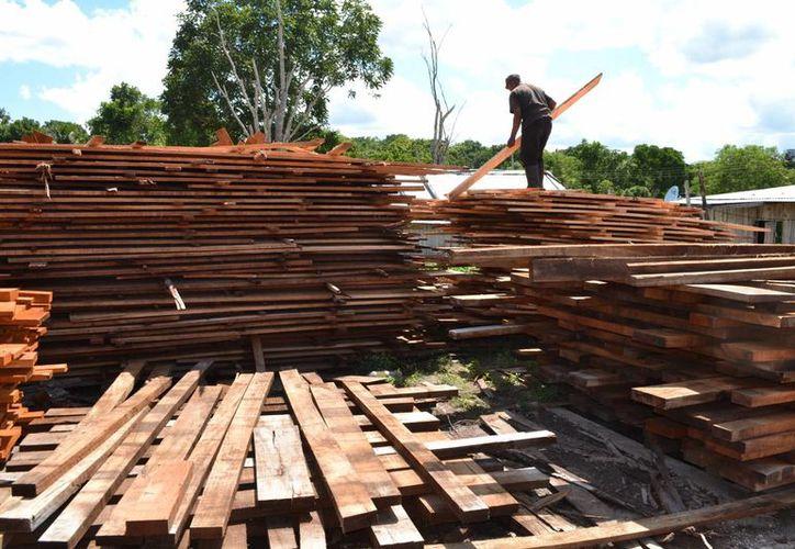 El estado sigue comercializando maderas en rollo. (Juan Rodríguez/SIPSE)