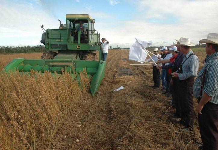 El programa contempla los componentes en modernización de la maquinaria agropecuaria. (Edgardo Rodríguez/SIPSE)