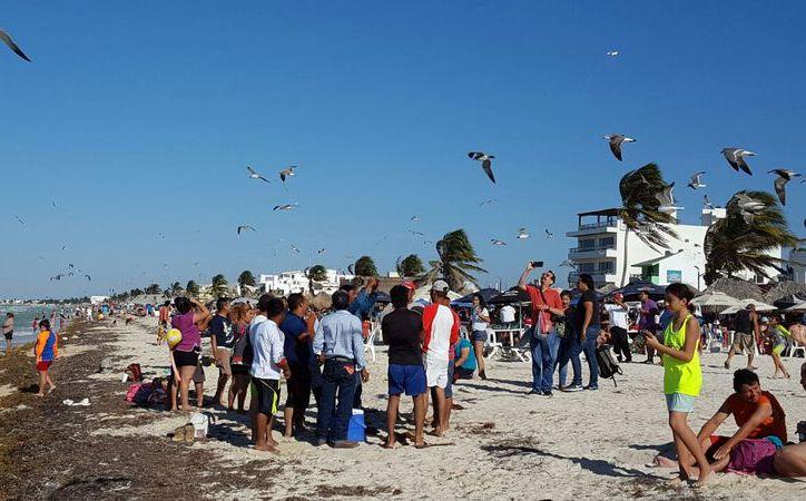 Cerca de siete mil visitantes llegaron este día a las playas de Progreso. (G. Keb/ Milenio Novedades)
