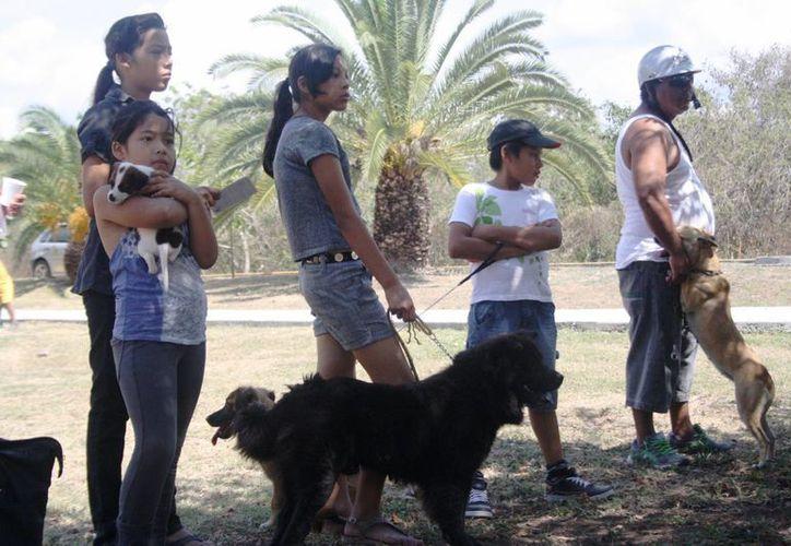 El Cebiam planea contabilizar cuántos animales domésticos hay en el municipio de Solidaridad. (Octavio Martínez/SIPSE)