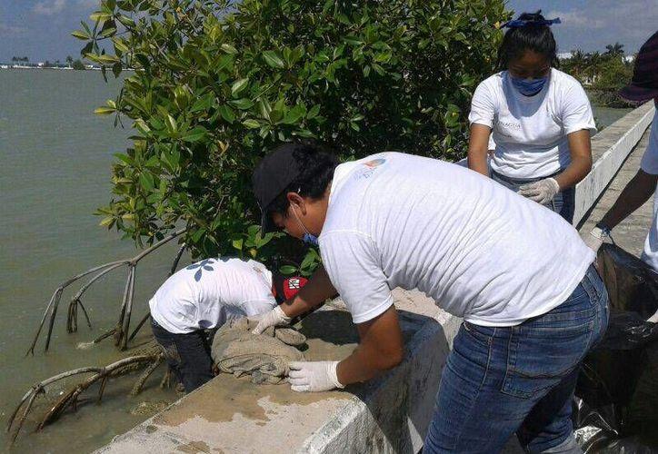 La campaña que inició a las 8 horas en la Concha Acústica,  y concluyó en el mismo sitio con el pesaje de los residuos recolectados. (Claudia Martín/SIPSE)