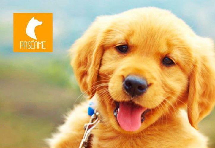 Según especialistas, los dueños de los perros gastan mil 407 pesos al mes en atenciones y cuidados para sus mascotas. (@PASEAME_APP)