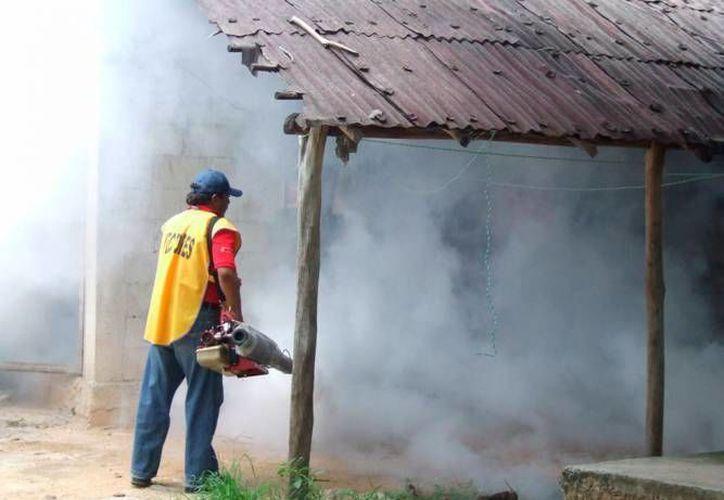 Se necesitan acciones de nebulización que acabe con la proliferación de moscos en zonas rurales. (Javier Ortiz/SIPSE)